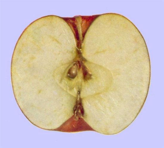 Wendy Lisa fruto del fondo